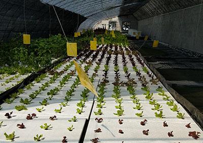 水培蔬菜<br/>农科院环境发展研究所水培蔬菜合作基地<br/>保护环境是我们每个人的责任,环保是保持和发展生态平衡,扩大有用自然资源的再生产,协调人类与环境的关系。